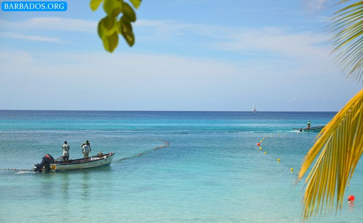 Barbados fishermen hard at work. What's your favourite Catch Of The Day in Barbados?