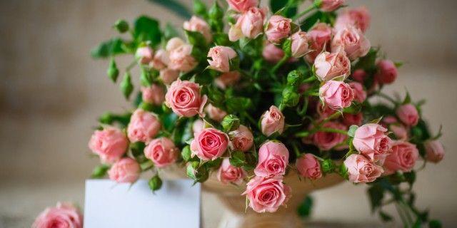 ミニバラの育て方!種まきと苗の鉢植え・地植え、寄せ植えの方法は?