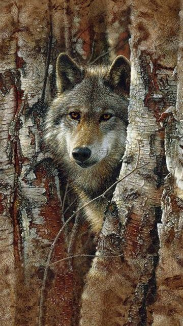 Photograph of a Timber wolf(Canis lupus) peeking through trees that looks like a painting.