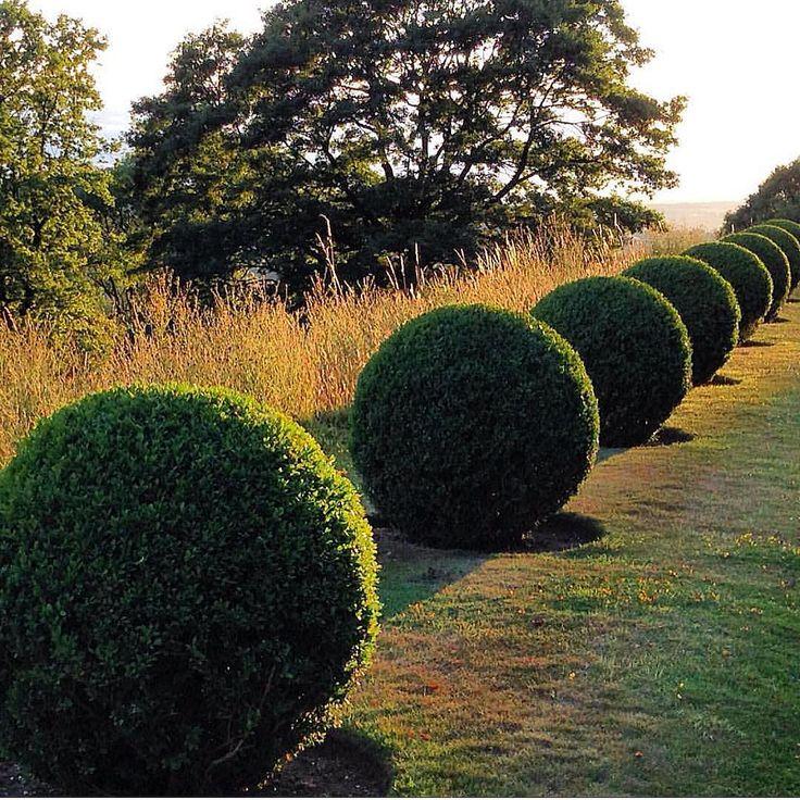 perrycroft clipped boxwood spheres italian gardenlandscape designgarden