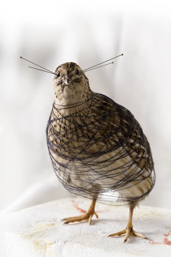 Taxidermic bird