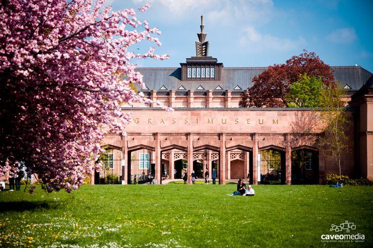 Kirschblüte am Grassi Museum