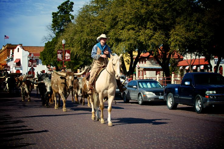 Get my 7 FREE basic photography tips - you NEED to know right here; http://pw5383.wixsite.com/free-photo-tips | Photographer Pernille Westh | Cowboys and Long Horn Cattle photographed in Texas · The Wild West