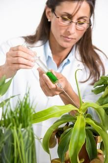 botanist acceseries