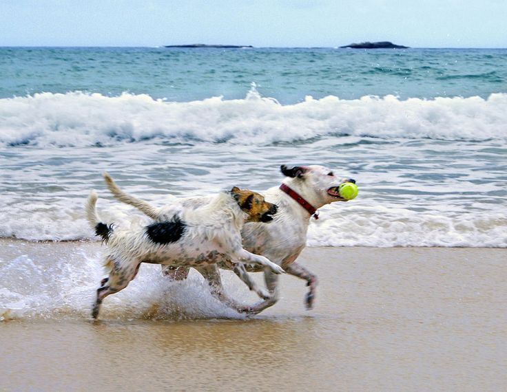 Dogs Love the Beach too!