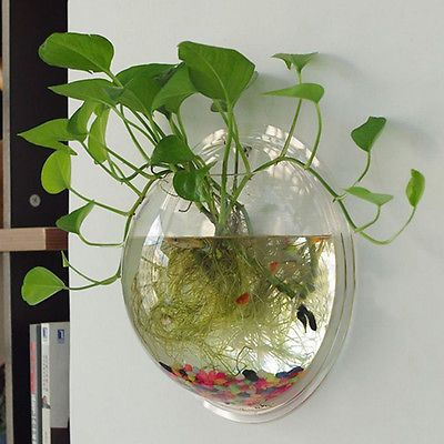 how to clean small fish bowl ideas
