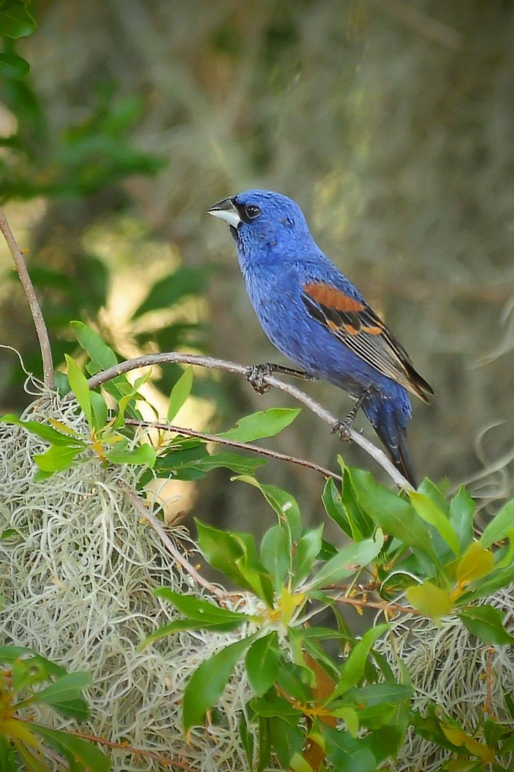 49 best birds sighted in our backyard flying overhead and in our