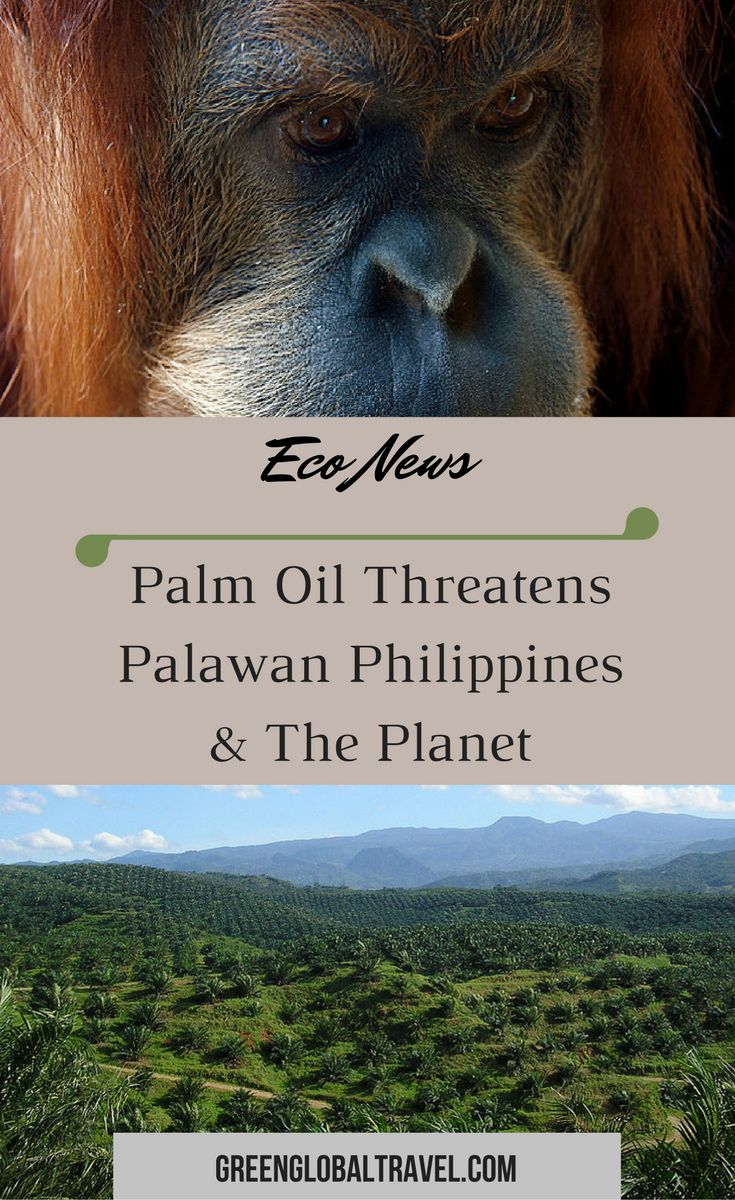Read about why palm oil threatens Palawan Philippines & the planet! | Trees | Animals | People | Orangutans | Donate | Share |