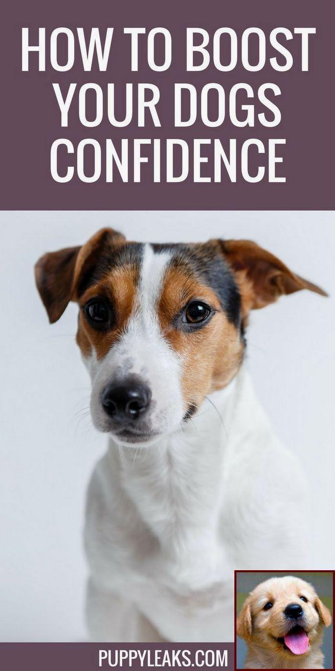 Dog Behavior Nosing Food Bowl And Dog Behavior Aggression Dog