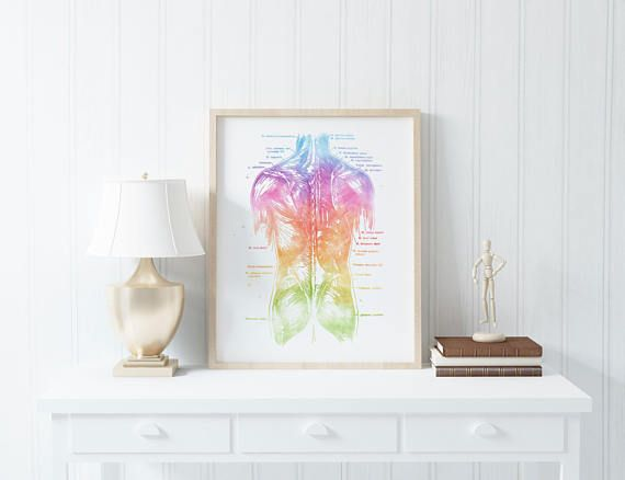Human Anatomy - Muscle Anatomy - Watercolor Anatomy Art - Physical Therapist Gifts - Med Student Gift - Medical Office Decor