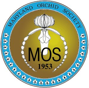 March 9,10,11, 2012. Join us at the Timonium Fairgrounds in the Horticultural Hall. The fairgrounds are located 2200 York Road, Timonium, MD 21093. Come get excited about an ever-growing hobby. Sponsored by the Maryland Orchid Society, you will be delighted with orchid educational talks throughout both days and the opportunity to join in on discussions and ask questions of the orchid growers. The Maryland Orchid Society and I invite you to join in on the orchid festivities. The orchid…
