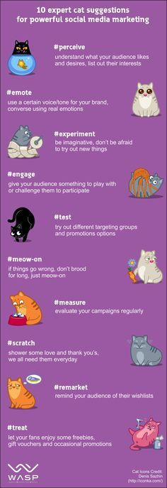 Cute  Expert Social Media Marketing Tips uFrom Cats
