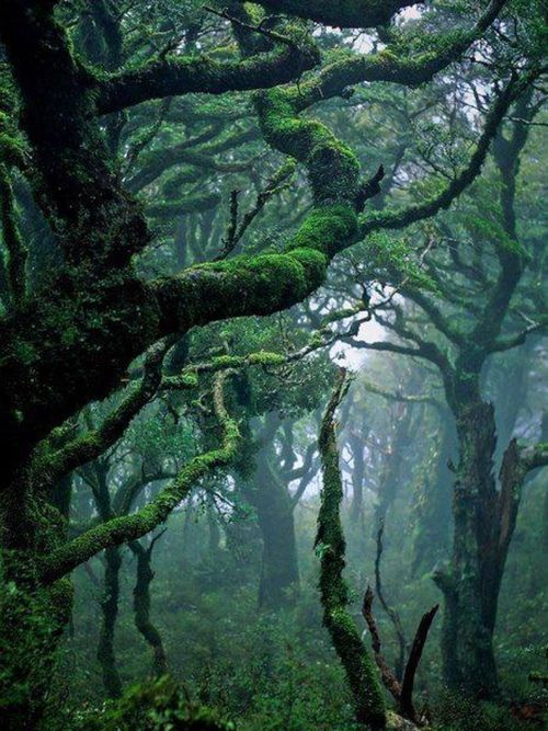 #Garajonay National #Park in La Gomera, #Spain!