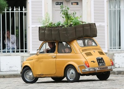 Green roof! Minis Gardens, Cars, Green Roof, Plants, Roof Gardens, Fiat 500, Bags, Fiat500, Mobile