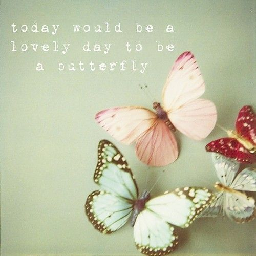 to be a butterfly