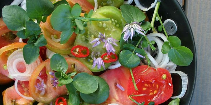 TOMATSALAT MED PURLØGSBLOMSTER - salad with chive-flowers
