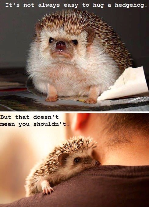 I love hedgehog hugs! :))) they are the absolute best <3
