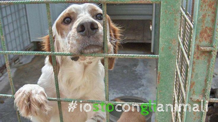 Petition · No to the privatization of the kennels in Rome #iostoconglianimaliignaziomarino · Change.org