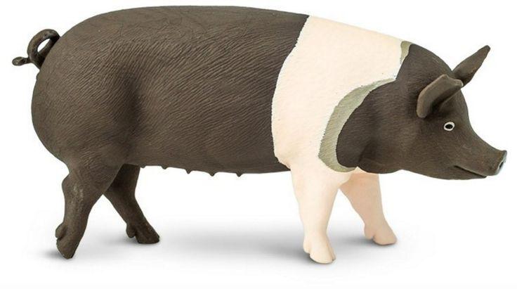 Safari Ltd Hampshire Pig www.minizoo.com.au