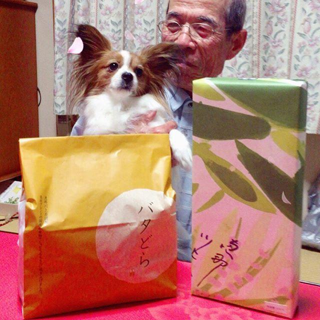・ 2017.4.14⭐︎ ・ 『ぽぽです🐶おじいちゃん、おたんじょうびおめでとう🎉㊗️👏ながいきして、ず〜っとぽぽとあそんでください😊』 ・ 74歳の誕生日おめでとう。 『ぽぽと写真撮ってあげるわ』って言いながら #snow を反応させて爆笑してるふざけた娘だけど、ぽぽが言うように長生きしてほしい。 これからもよろしくお願いします(*'ω'*) ・ #パピヨン#愛犬#ぽぽ#ぽぽは家族 #全てのワンちゃんが幸せでありますように #papillon#dog #cute #cawaii #fun #familly #love#happy #happybirthday  #記念日投稿 #誕生日おめでとう #親が健在でいる事の #ありがたみ #いつもありがとう  #感謝の意味を込め #恵那川上屋の和菓子 #だが終始ぽぽに夢中 #少しは触れてくれ #安くはないんだよ #な〜んてね #お父さんの娘で良かったよ