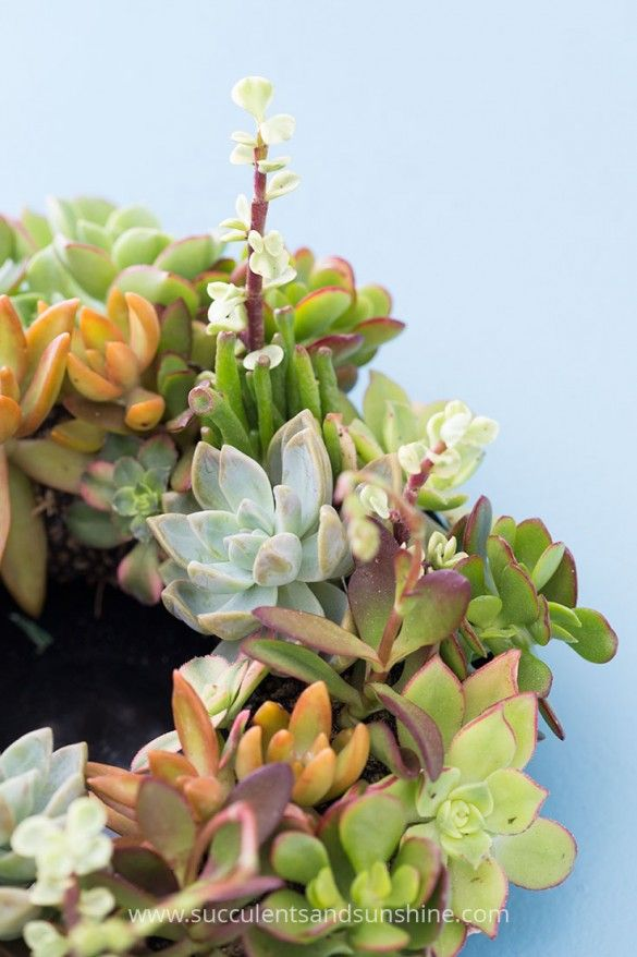 This succulent centerpiece will be perfect for my wedding!