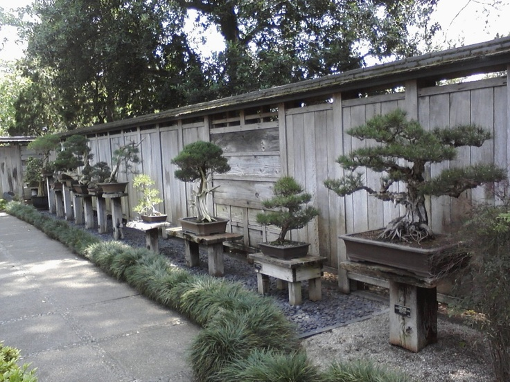 Bonsai Garden At The Huntington, San Marino, CA