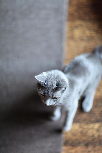 Tigrusha....my lovely girl) by FeltedPleasure, via Flickr