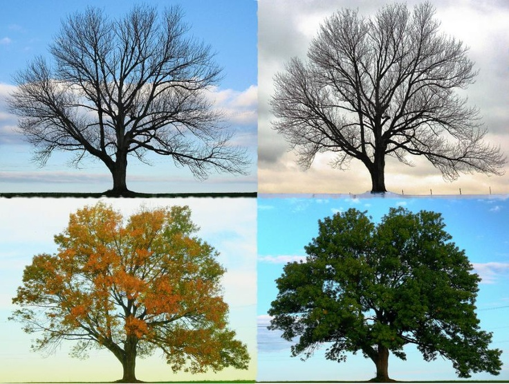 Do this with Wally's tree!!!! Jan, April, July, Oct