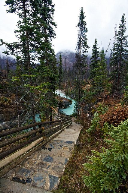 Marble Canyon Provincial Park inside of Kootenay National Park, British Columbia, Canada.  Photo: orbital-vancouver, via Flickr