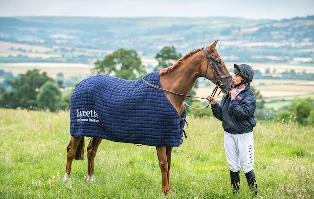 National Hunt star Silviniaco Conti wins first rosette in new career http://trib.al/myWN7Q3