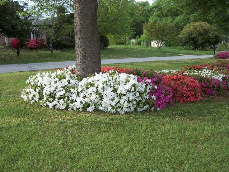 landscaping around trees flower bed interesting design ideas for the area around trees pinterest landscaping landscape designs and tree planting