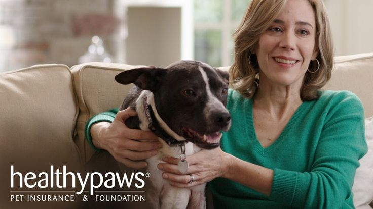 Video Pet Insurance for Dogs and Cats   Healthy Paws