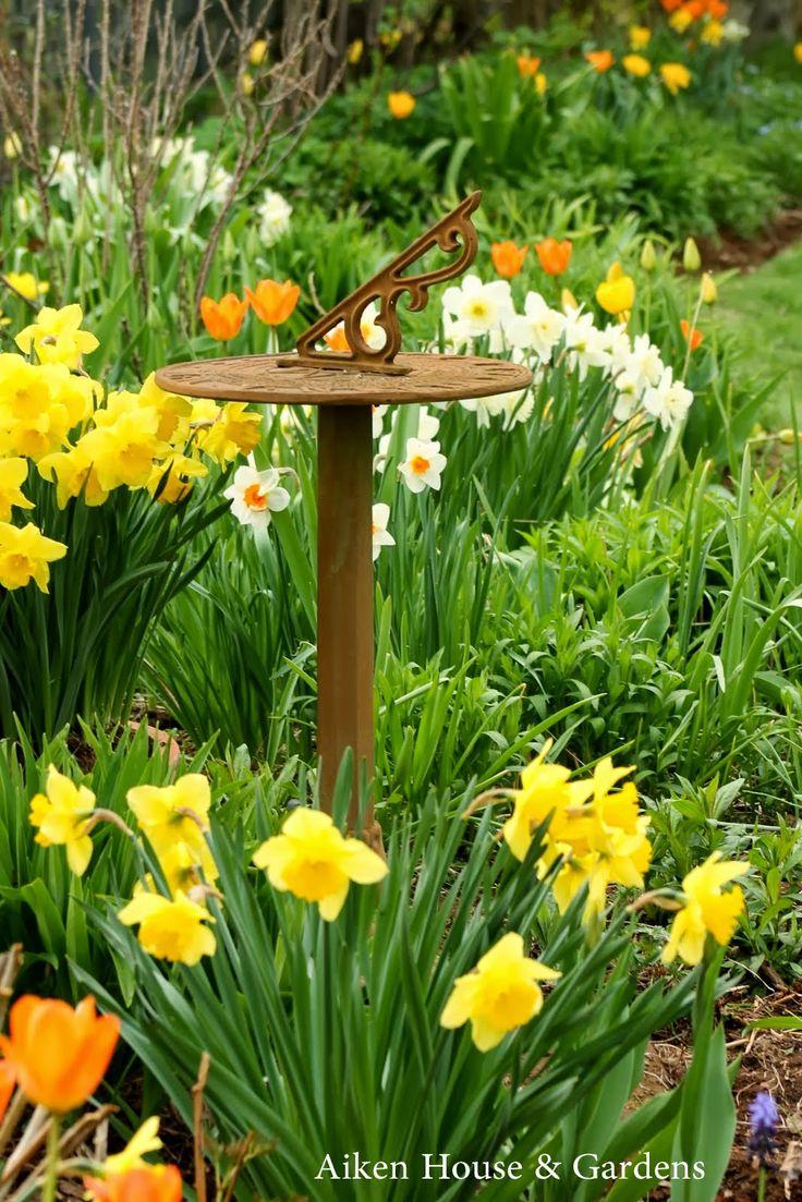 615 best daisies daffodils u0026 dandelions images on pinterest