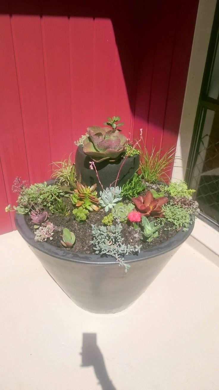 My succulent garden pot.