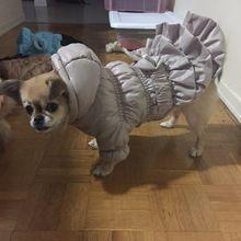 Tienda Online Varios de Lujo Del Perro Del Invierno Abrigo Perro Mascota de La Princesa Vestido abrigo Trajes de Mascotas Ropa Para Perros Ropa de Invierno para Perros Pequeños Pet | Aliexpress móvil #abrigos