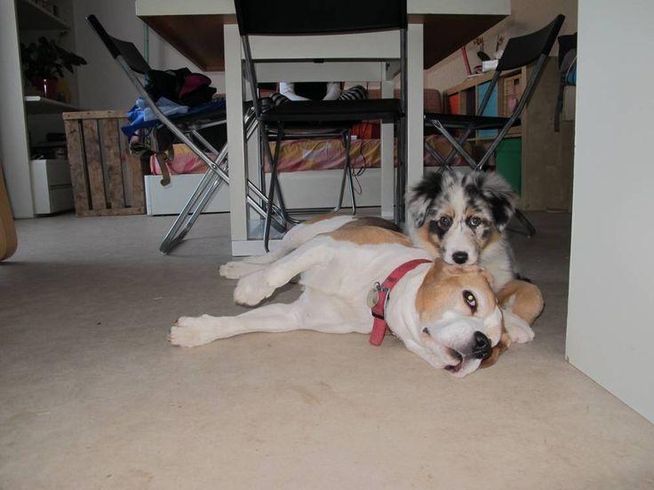 les 66 meilleures images du tableau chien sur pinterest | animaux