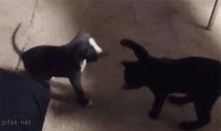 Briga comigo de pé!