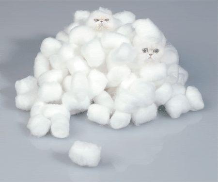 cat, cats, cotton balls, meow meow meow, weird #whydocatmeow - Catsincare.com!