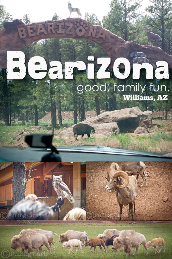 Bearizona is near the Grand Canyon in Arizona.  It's a great place to see wildlife! #pullingcurls