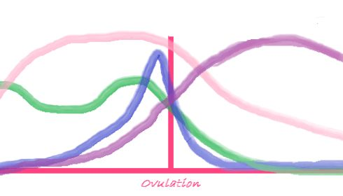 When Do You Ovulate? Ovulation Symptoms, Prediction Tools, and Timeline