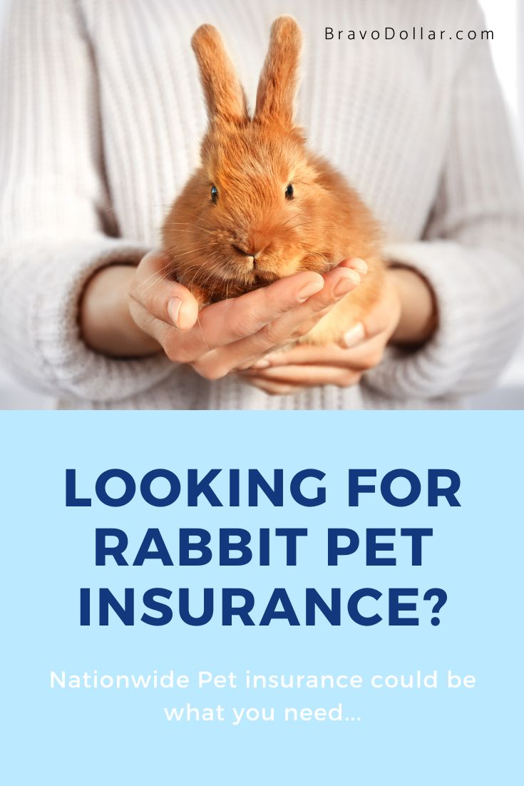 Rabbit Pet Insurance Where To Find And How Much Pet Rabbit Pet Insurance