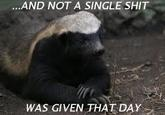 just because it's Friday... also honey badger