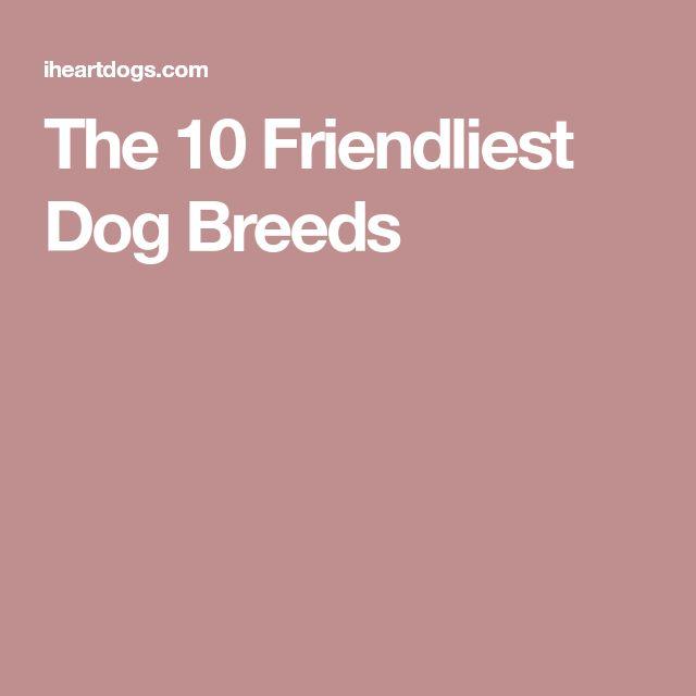 The 10 Friendliest Dog Breeds