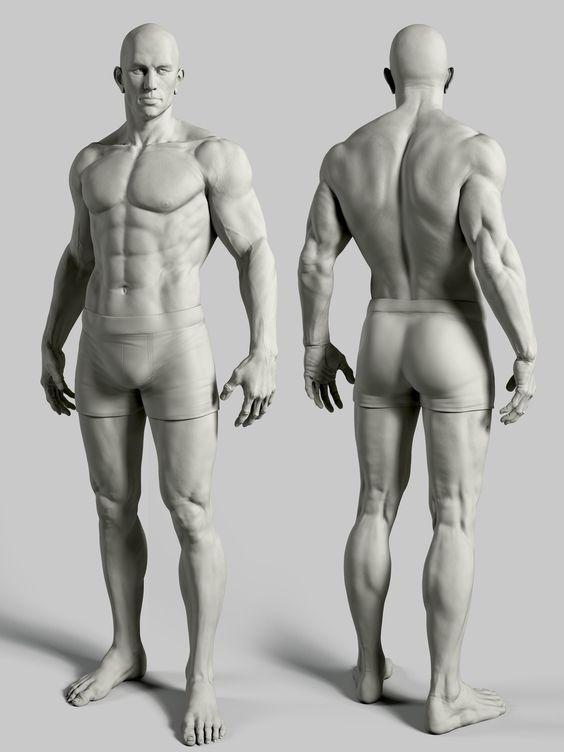 form of the male figure arm arms leg legs torso pelvis anterior posterior dorsal front back rear: