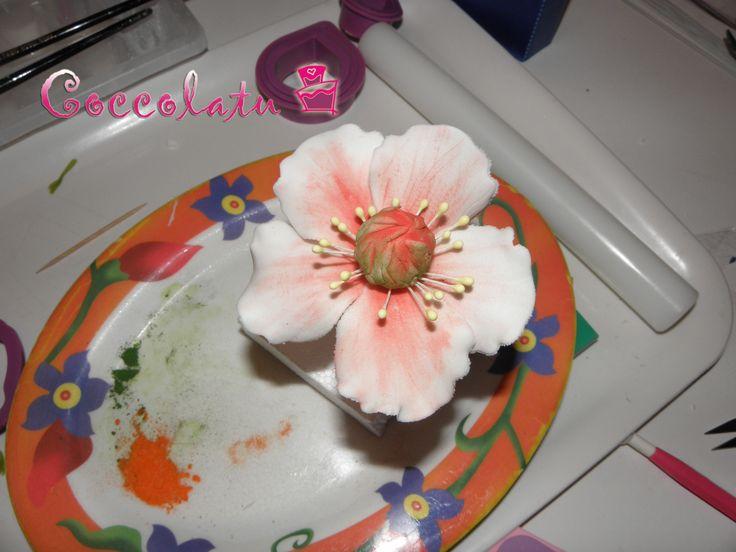 Anemone con sfumature rosse :)