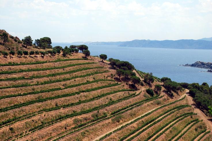 Verano en la Finca Garbet de Castillo Perelada. El viñedo está precioso en esta época del año.