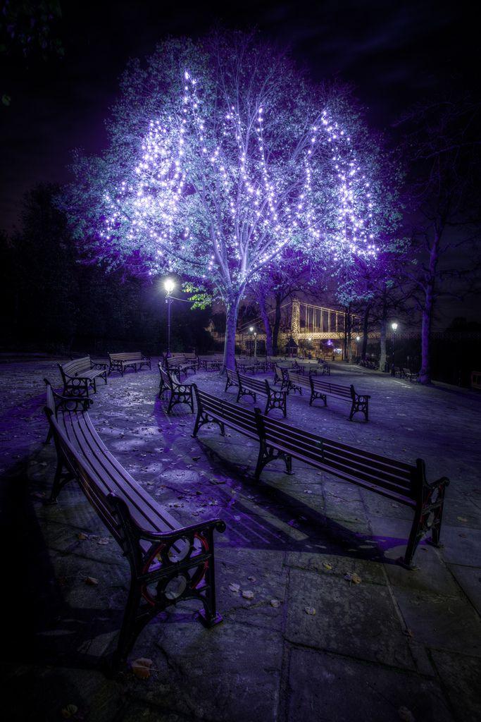 Purple Christmas Lights by Mark Carline