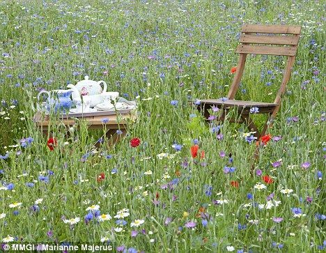 Image result for in a meadow on your back