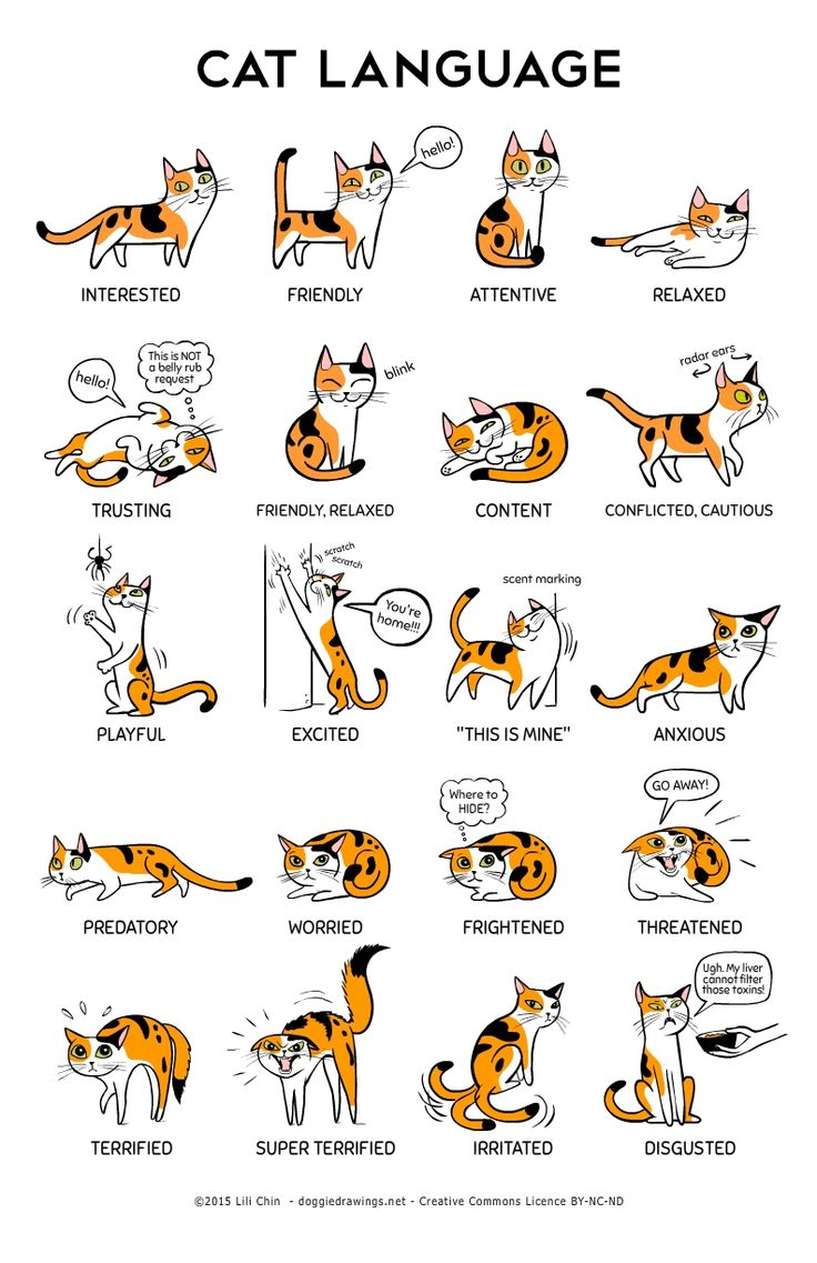 What Do Cat Want: Cat Language! A big thank you to the Training and Behavior Dept of Oregon Humane Society for their help with cat body language information.