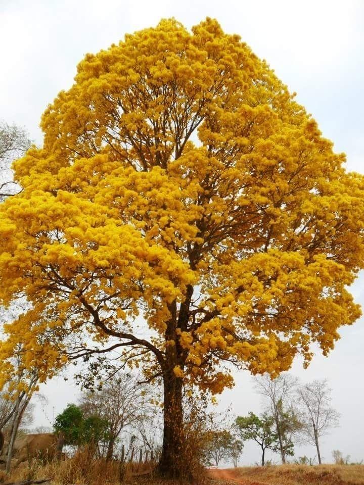 Internautas do UOL mandam lindas fotos para celebrar o Dia da Árvore - Fotos - Meio Ambiente